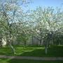 Весна на даче...