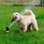 Собака играет со спринклером