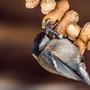 Птиц и арахис
