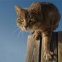 Зеленоглазый мачо