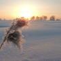 Морозное зимнее утро
