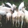 Про осень, коз и гостей