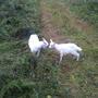 Феня, бешенство и собаки