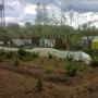 Тепличка с огурцами весной.