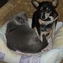 Когда прохладно - к ней кошка приходит греться