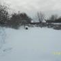 Зимний сад. Наш яблоневый сад