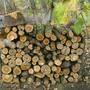 После вырубки старых садовых деревьев