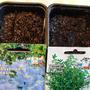 Сею семена на гидрогель, чтобы было вдоволь влаги до всходов
