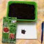 Посеяла целую плошку на рассаду, и еще осталось на второй посев в грядку!