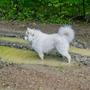Кто бы мог подумать, что такой беленький пес - настоящая свинка! В лесу ни одна лужа не осталась непроверенной.