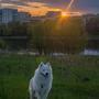 Закатные лучи в парке