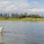 Пасет лебедей, которые проплывают по реке