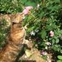 Кошка Биз (что значит - поцелуй) намекает о необходимости удаления увядших цветов.