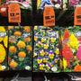 От СеДеК вот цветы очень дивной красоты
