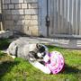 Джесси - очень подвижная собака, которая не любит сидеть на месте, она всегда в движении.  Познает команды, очень любит купаться, играть в летающую тарелку.  Любит петь песни =).  Самое любимое её занятие - играть в догонялки в саду и рыть глубокие ямы.
