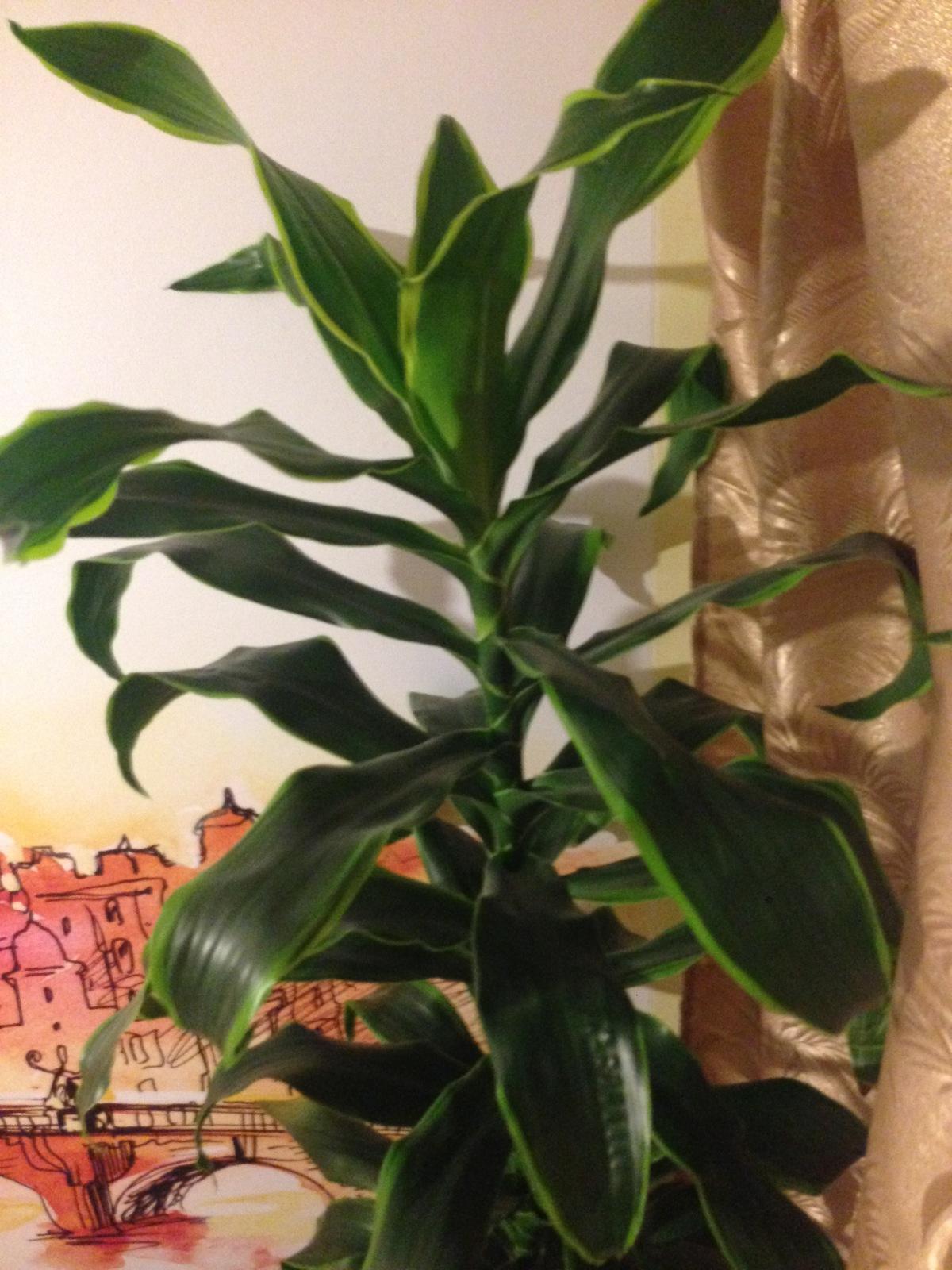 Комнатное растение по фото онлайн