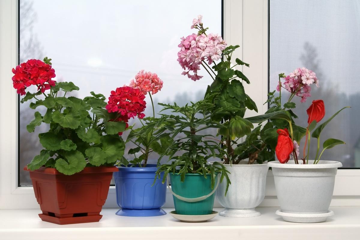 Цветы комнатные для северной стороны