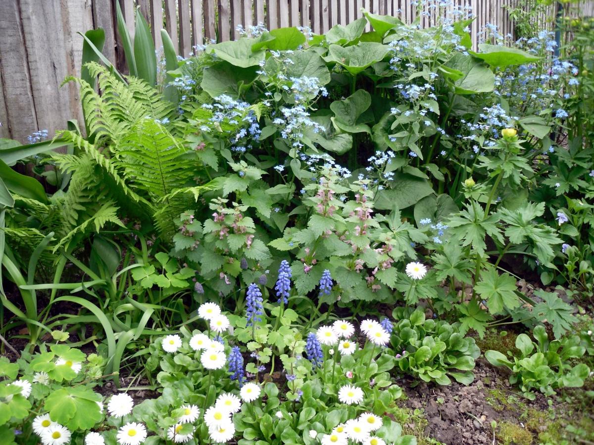 Первые весенние цветы в саду виды сорта уход