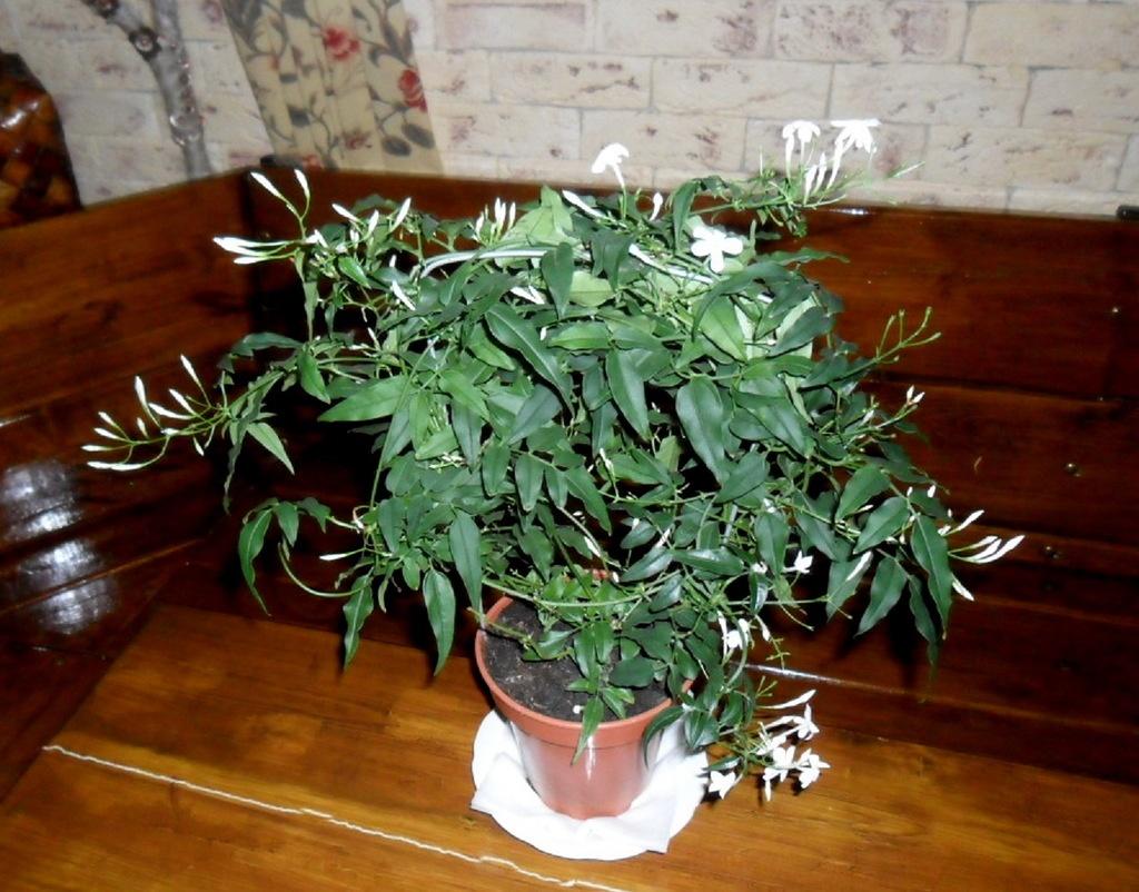 Ароматные комнатные растения
