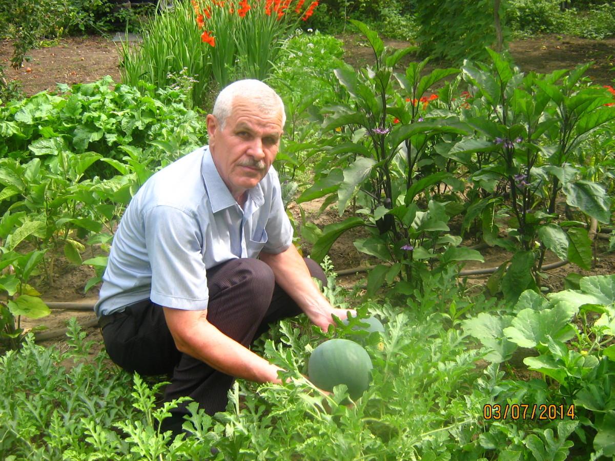 Вкусный Огород