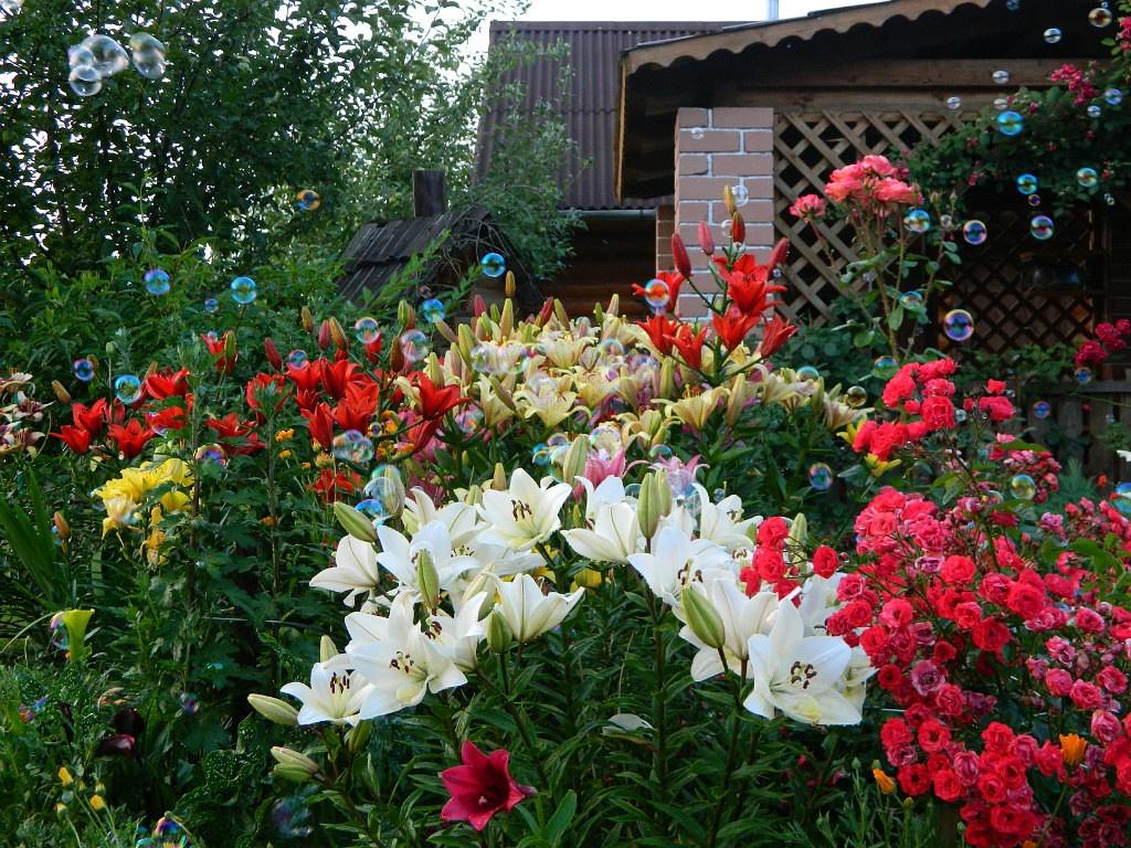 Мои домашние цветы - myhome-flowers.ru