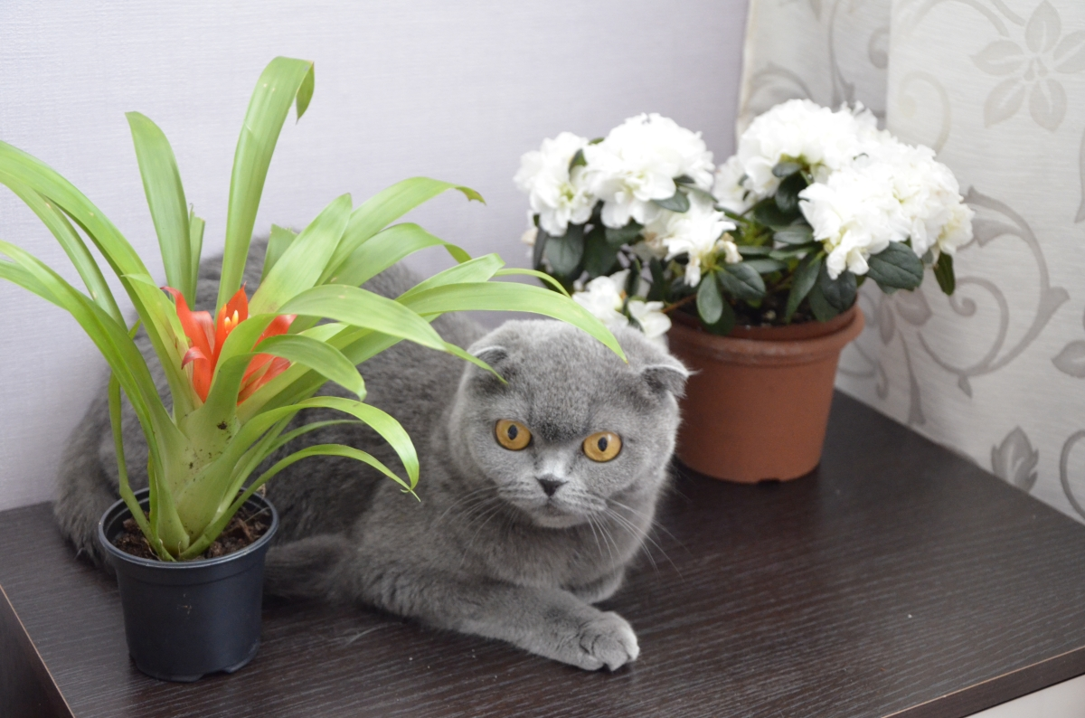 Русские любят цветы