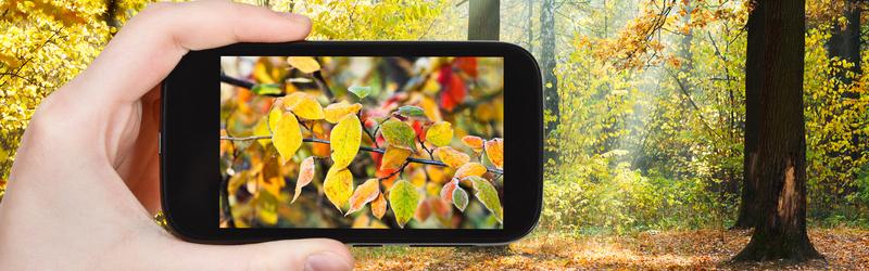 Конкурс дачных фотографий Золотая осень с Аэлитой