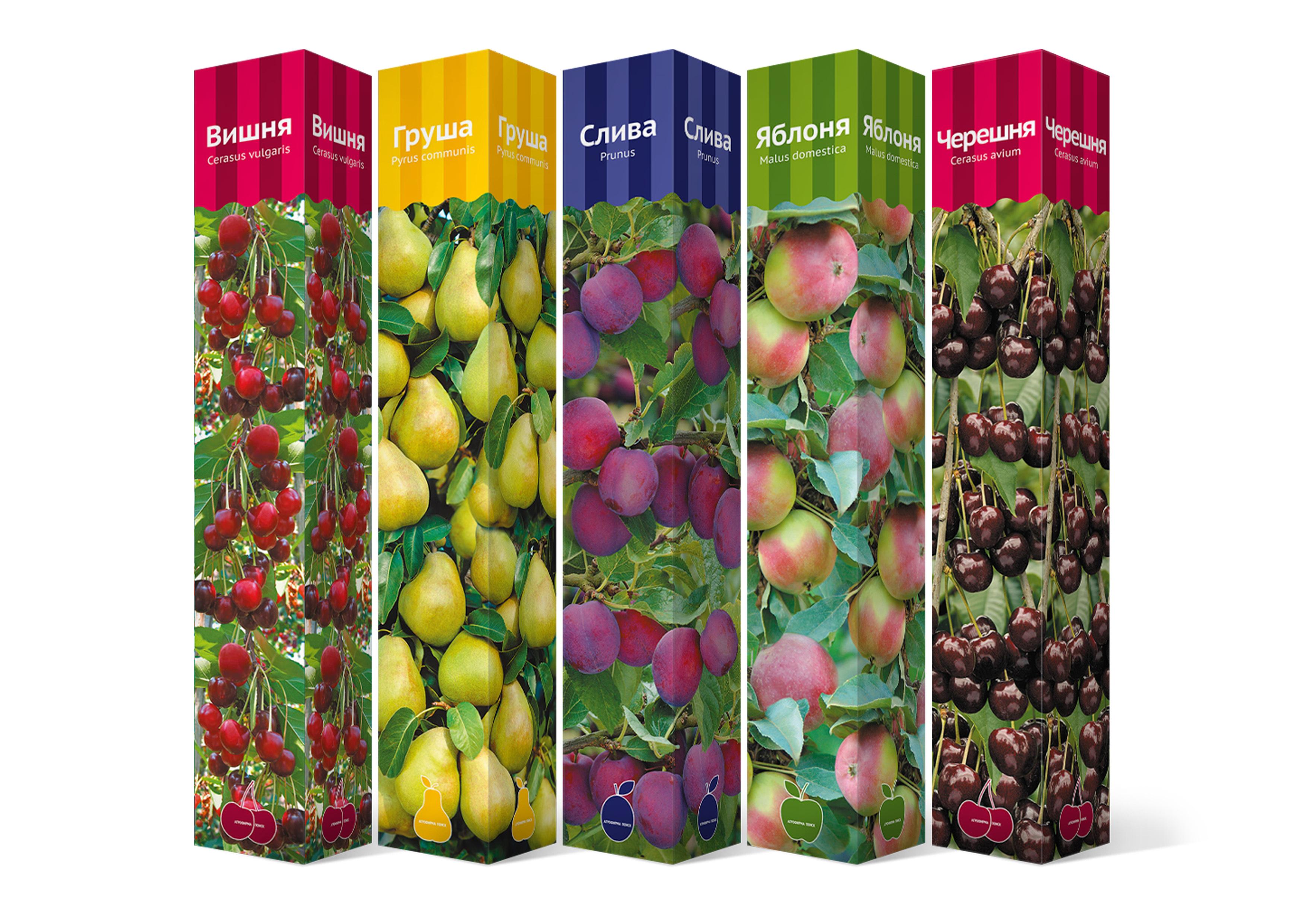 Набор саженцев плодовых деревьев
