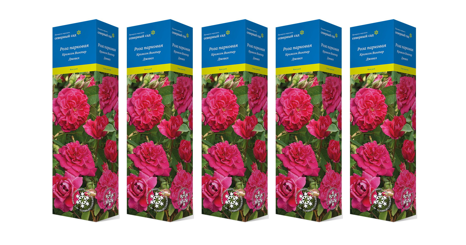 Розы серии Северный сад