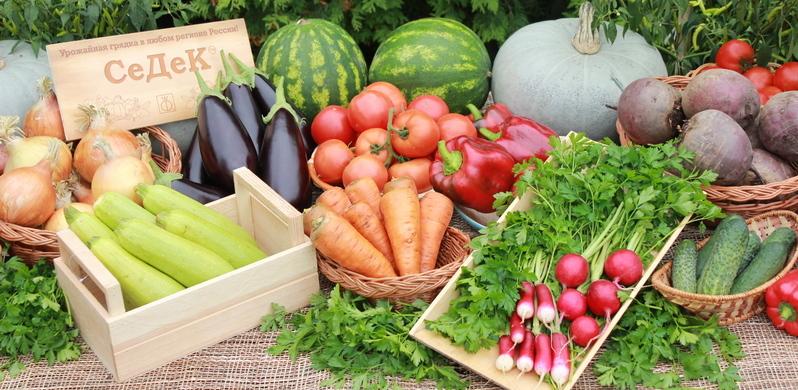 На вопросы дачников отвечают агрономы компании СеДеК