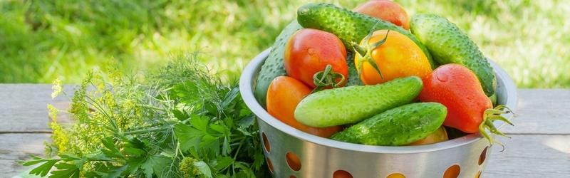 Народное тестирование семян овощей и зелени компании ГАВРИШ