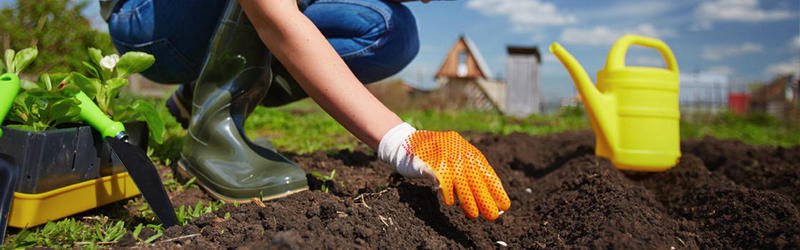 Тестирование семян овощей от ООО «Агрофирма АЭЛИТА»