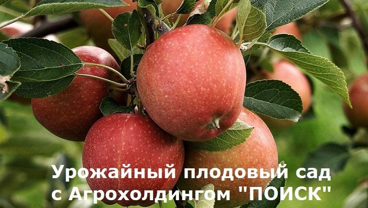 """Урожайный плодовый сад с Агрохолдингом """"Поиск"""""""