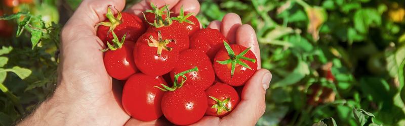 Тестирование семян овощей от ООО «Агрофирма АЭЛИТА»-2020