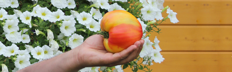 Тестирование семян овощей Премиум Сидс