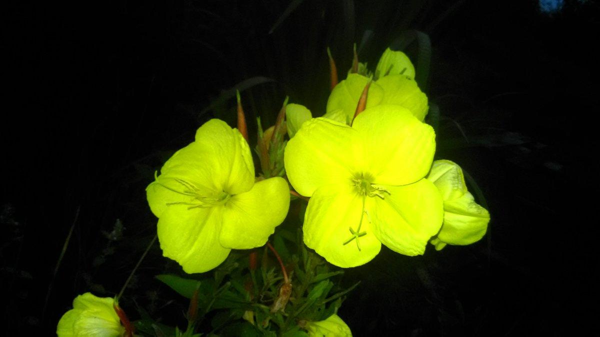 Гостиная в бежевом цвете, преимущества - фото примеров