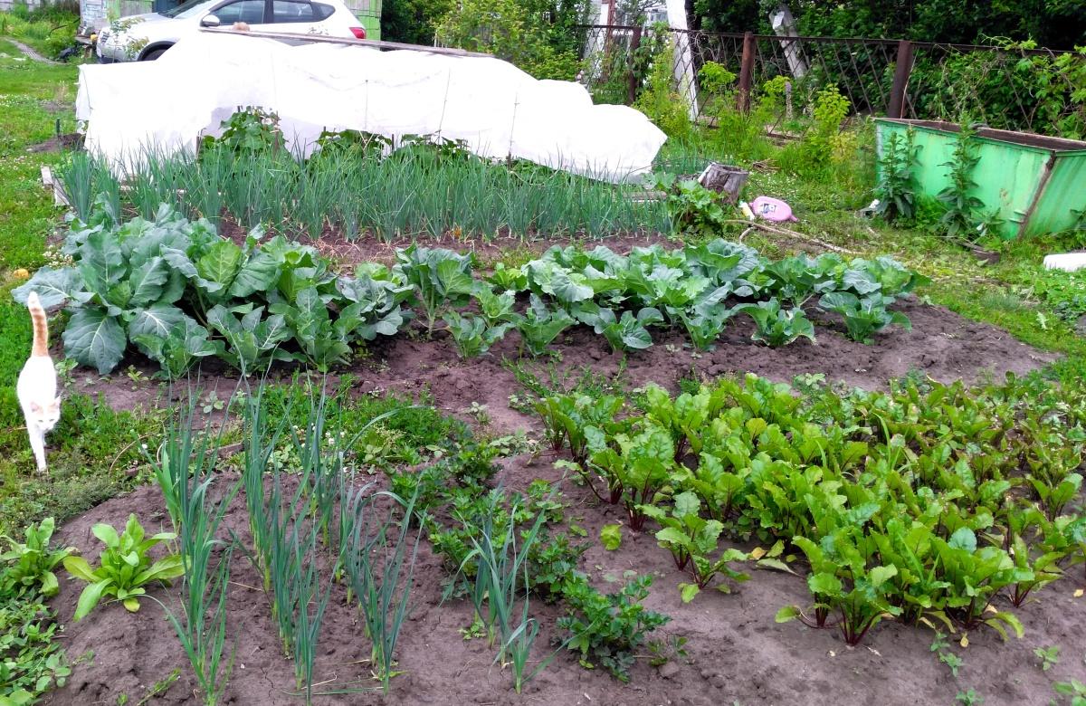 картинки огород с грядками плюс обшивки