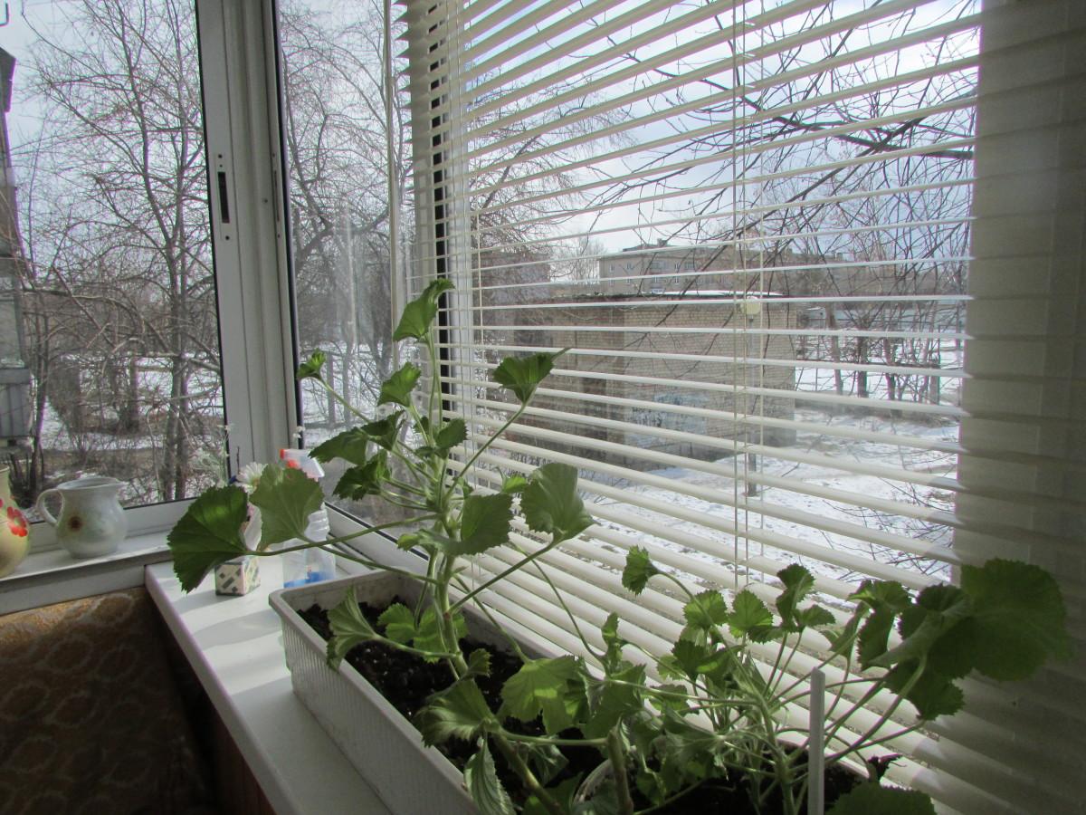 при какой температуре можно выносить рассаду на балкон