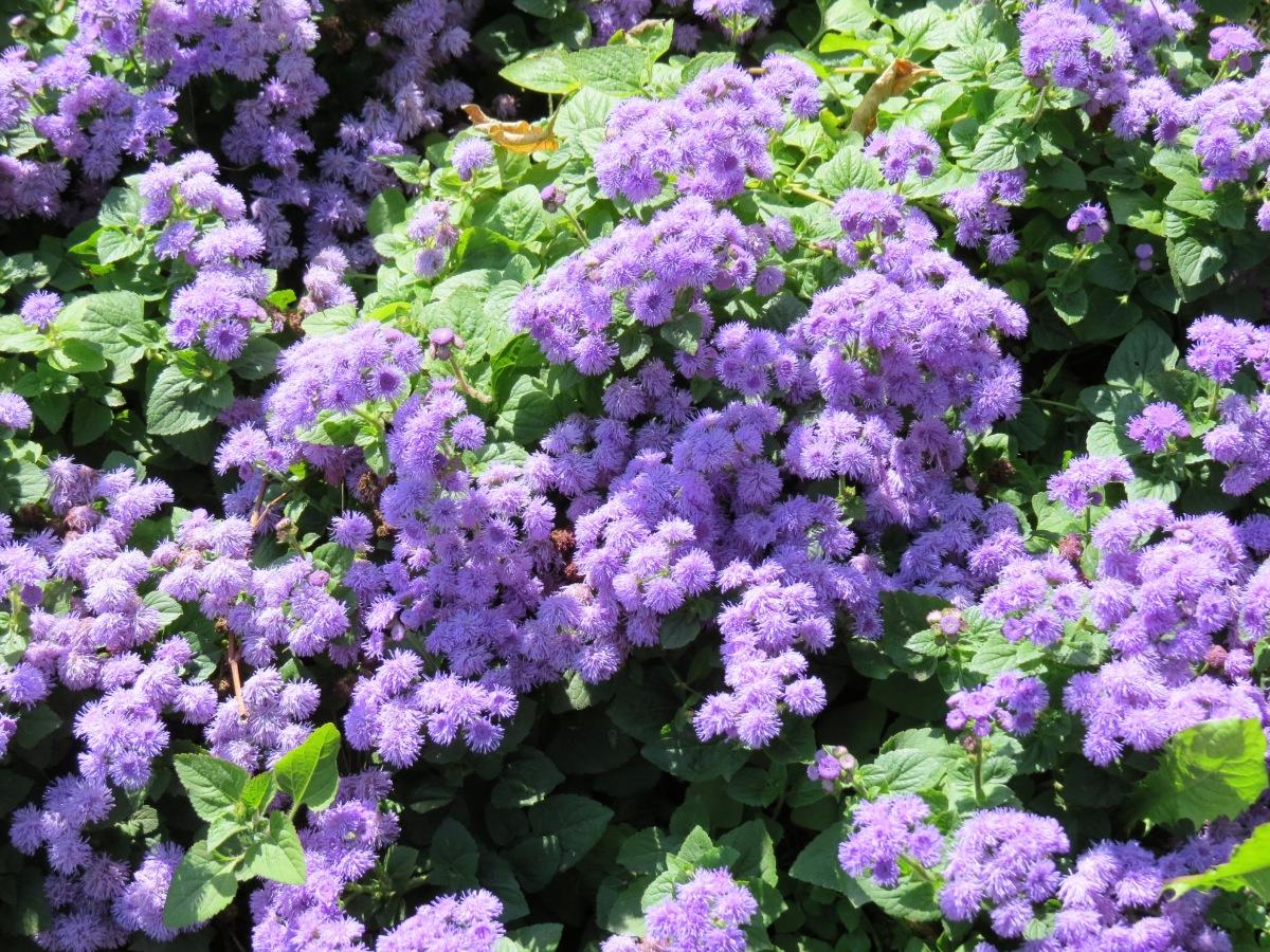 Купить бордюрные цветы доставка цветов оскемен