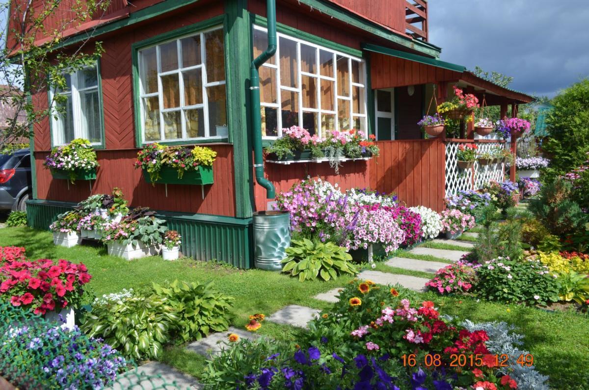 Картинки цветы на дачах