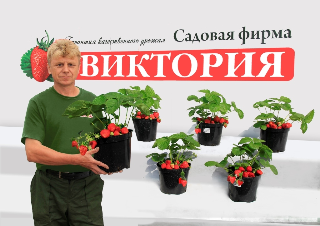 Адрес Интернет Магазина Сад