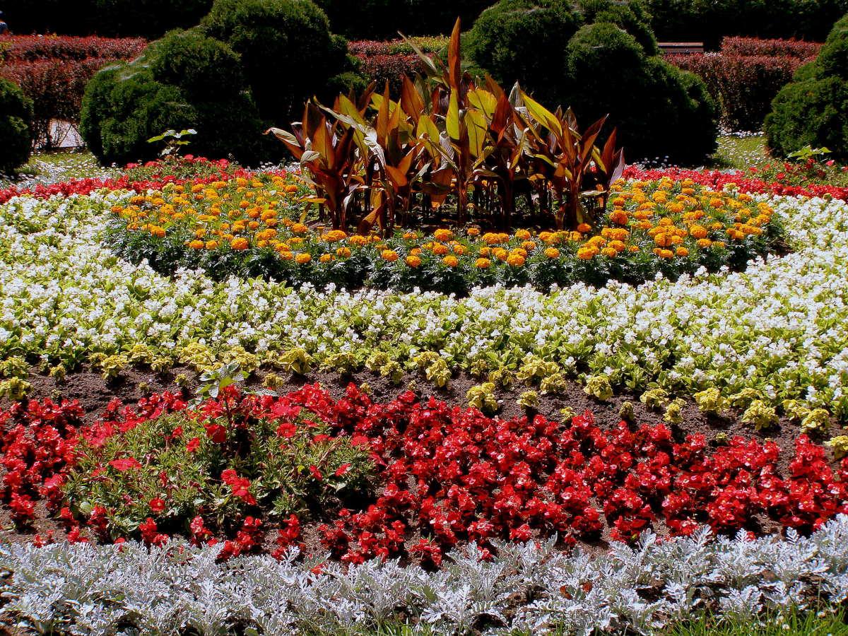красивые цветы для клумбы фото и названия кухне такие обои