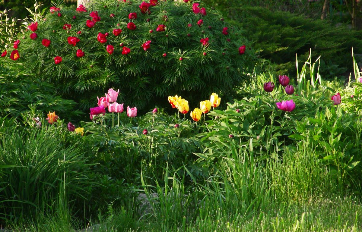 цветы марьины коренья фото трепетно будем