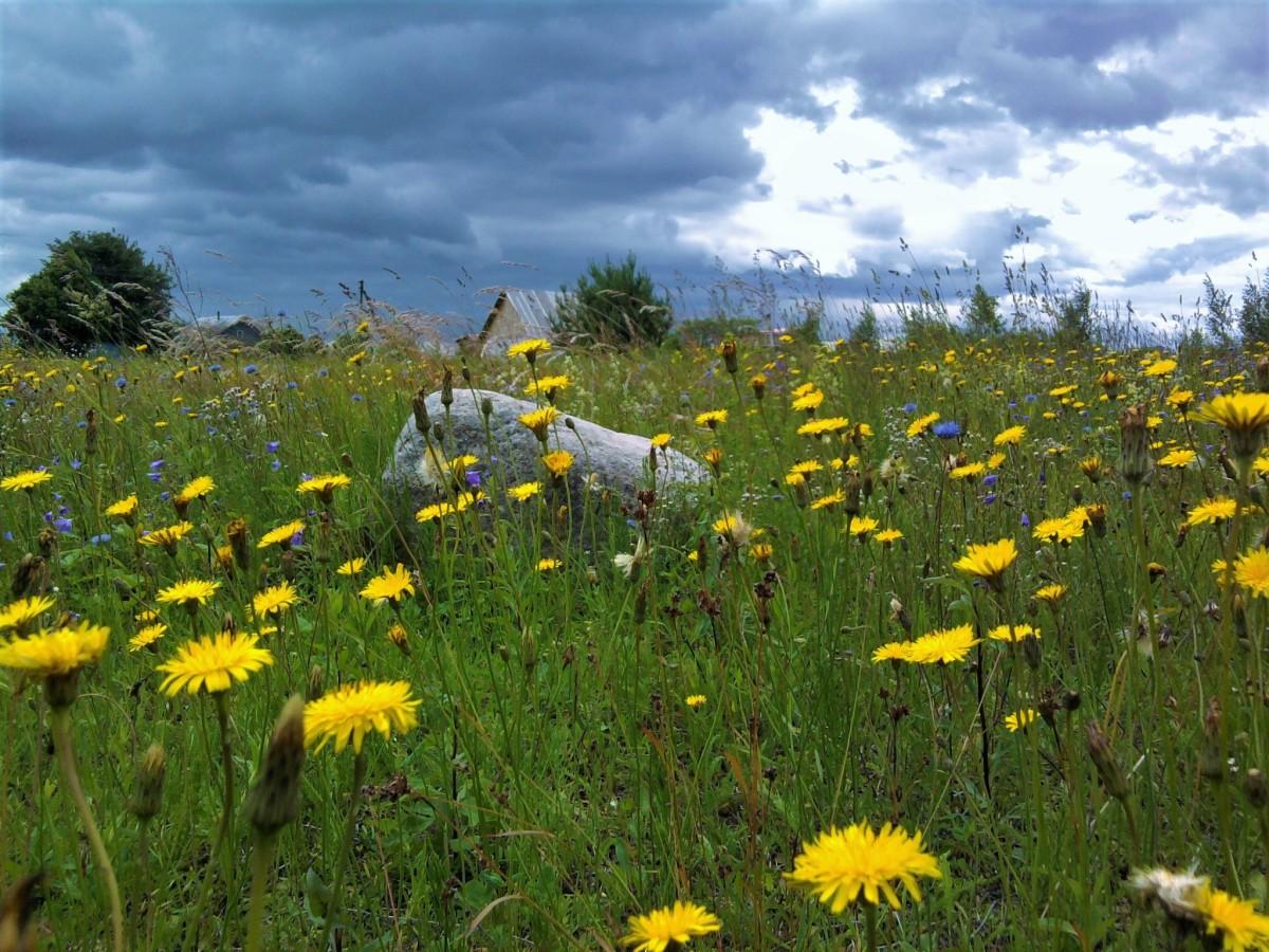 поле одуванчиков летом фото общем, доны педро