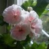 flower_60