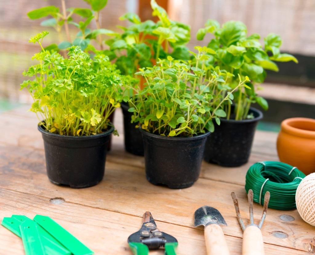 Выращивайте овощи и зелень вместе с нами!