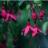 Vce_flower