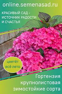 Тюльпан Триумф: описание и характеристики сортов, особенности выращивания с фото